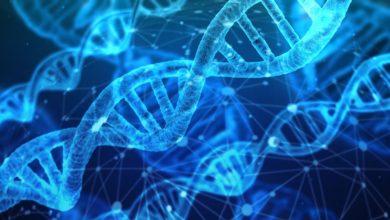 dna-south-korea-genome-blockchainland