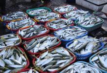 overfishing-waste-seafood-blockchainLand